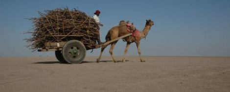 Camel_cart_in_Rann_of_Kutch