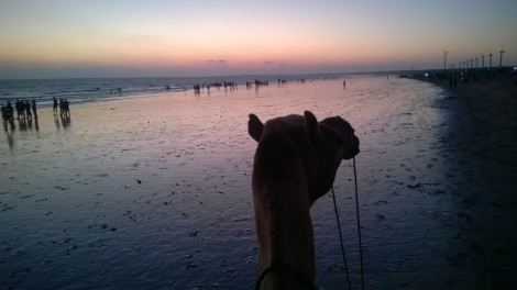 Camel ride on the Mandvi Beach is quite the thrill.